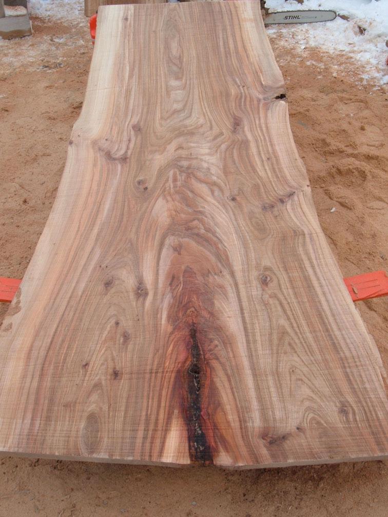Ulmus Rubra Fallen Giant Reclaimed As Urban Lumber