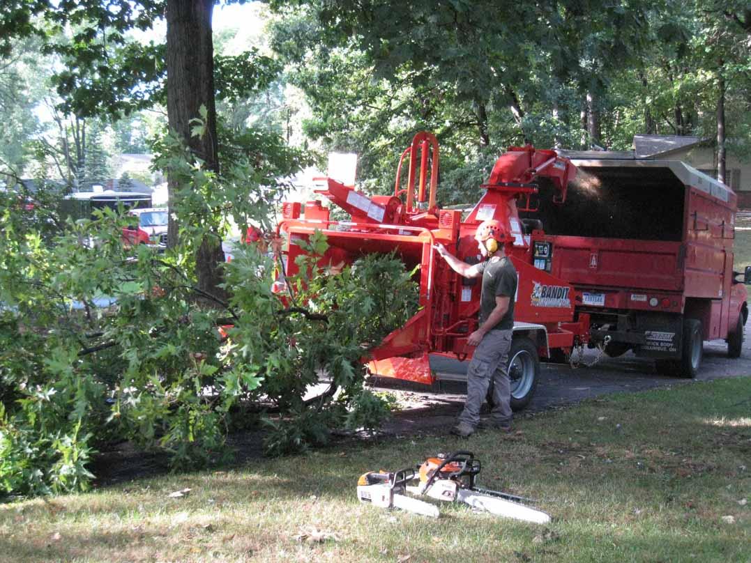 Tree Removal Tree Service Livonia Michigan Arbor